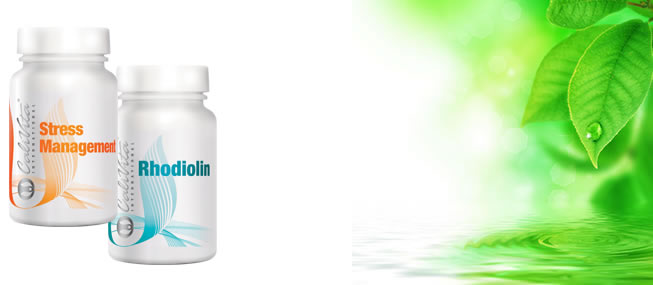 Rhodiolin+Stress Management